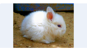 The Lagomorph - Gary couldn't weld the nutrient charge